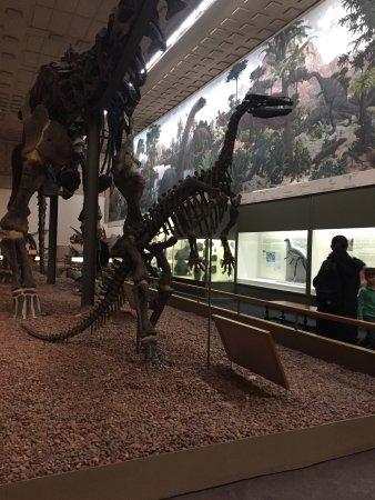 Yale Peabody Museum of Natural History : Dinosaur