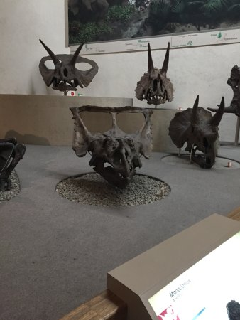 Yale Peabody Museum of Natural History : Ceratopsian display
