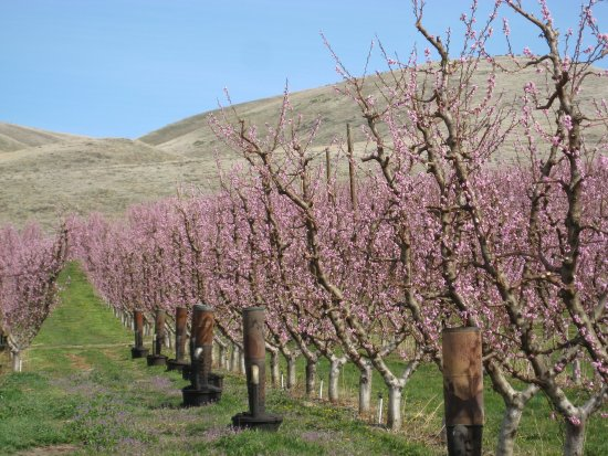 Zillah Lakes Inn is situated near the heart of Yakima Valley's fruit orchards