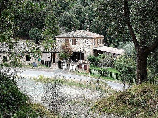 Monticiano, Itália: vista del podere completamente immerso nel verde
