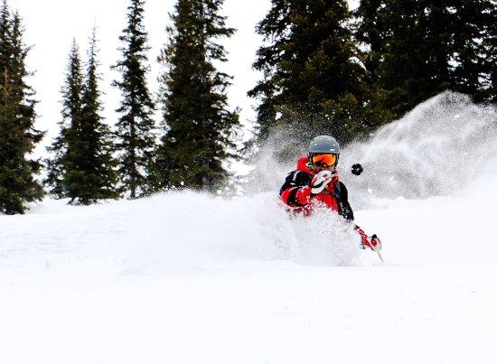 Fernie, Canadá: pure powder face shots all day long