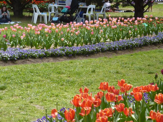 Sutton, Australia: Tulip Top Gardens 7 Oct, 2017