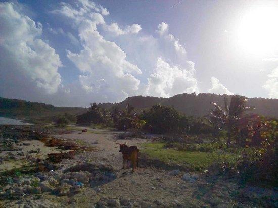 Le Moule, Guadeloupe : Le cimetiére sans croix et sans noms