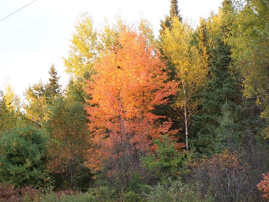 Eagle River, Висконсин: Visit us in the fall and put some color in your life