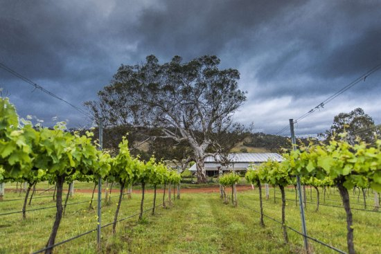 Mount Majura Vineyard