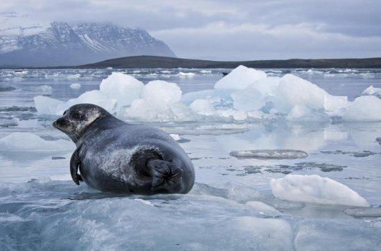 Jökulsárlón Glacial Lagoon Day Trip fra...
