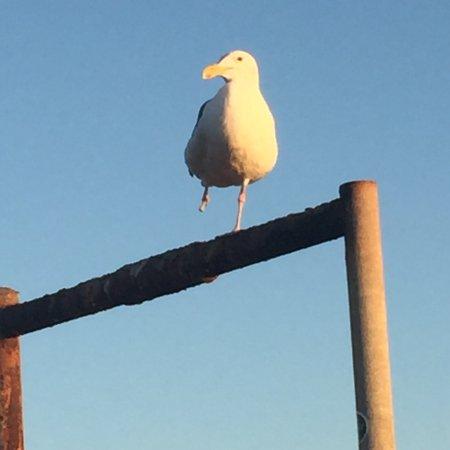 Imperial Beach Pier: photo3.jpg