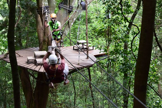 Cathkin Park, South Africa: Canopy tour Drakensberg
