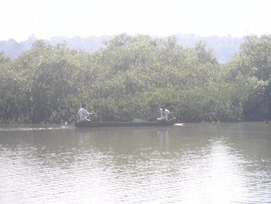 Ribandar, India: Amanhecer / vista para o Mangal