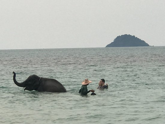 Kai Bae Beach With Elephant