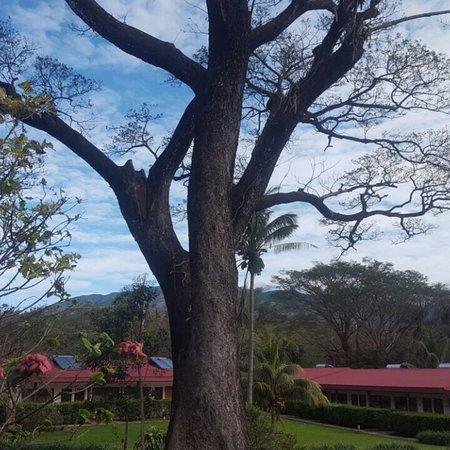 Hacienda Guachipelin: Parte de lo hermoso que te ofrece la Hacienda