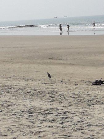 Hotel Sea Gull: Морждим