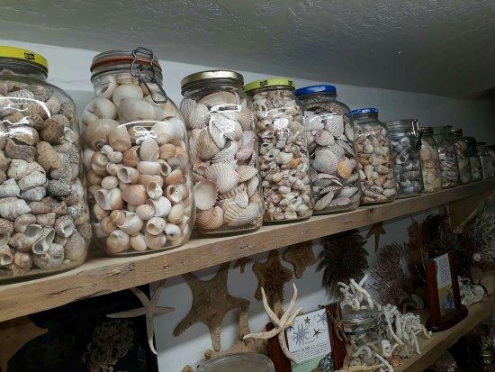 Museo de las conchas