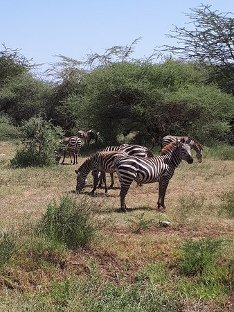 Lake Manyara Serena Safari Lodge : 20180205_143914_large.jpg