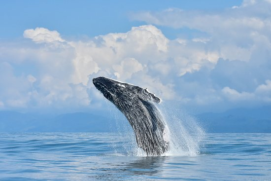 Uvita, Costa Rica: Whale watching tour