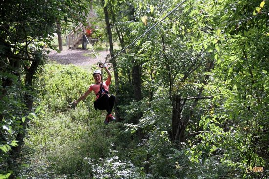 Petersburg, KY: Our zip line canopy tours take you directly through the woods and between the trees.