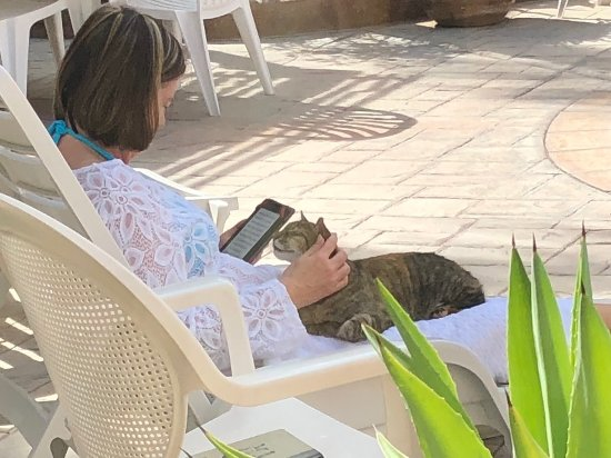 Coco Cabanas Loreto: Loved having Loretta (the cat) sit with me, while I relaxed next to the pool