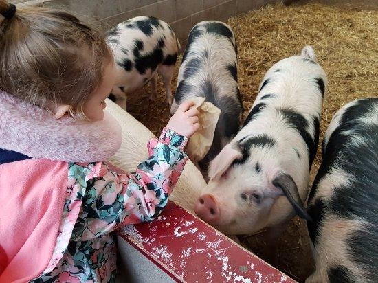 The Gincase Farm Park: 20180207_113341_large.jpg