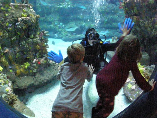Kure Beach, Carolina del Norte: Scuba diving shows take place daily at the NC Aquarium at Fort Fisher.