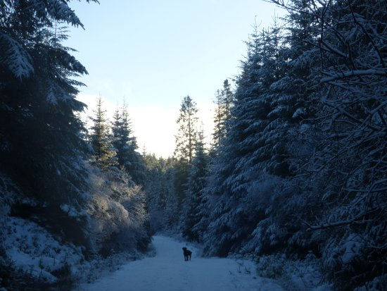 Argyll and Bute, UK: Fearnoch forest