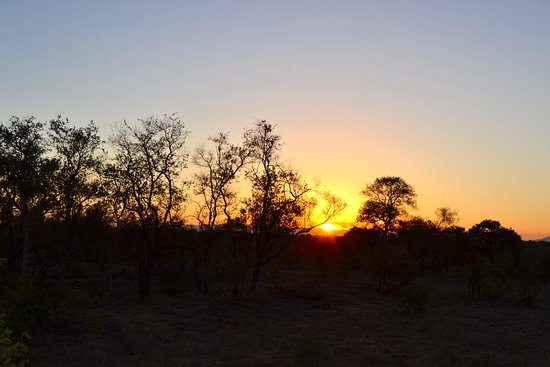 Manyeleti Game Reserve, Afrique du Sud : Solnedgang på kveld-safari