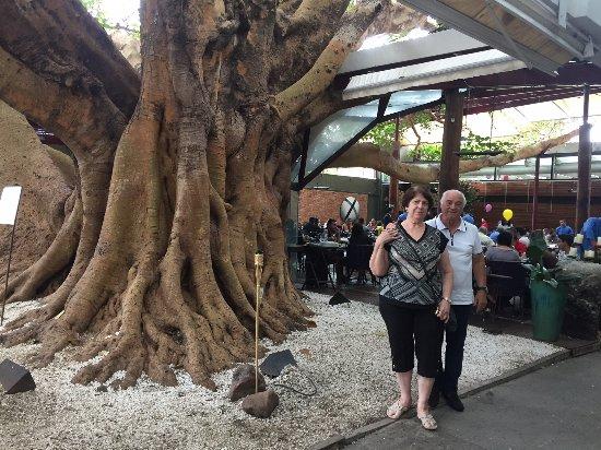 Figueira Rubaiyat: Sr Ayres e Maria Elena curtindo o domingo junto a Figueira de 100 anos!