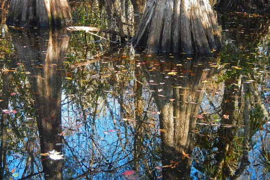Copeland, FL: Cypress reflections