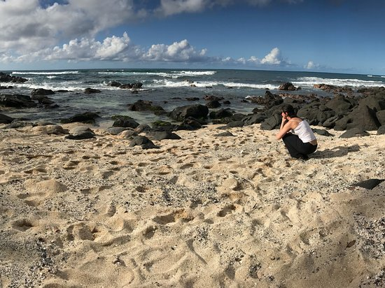 Hauula, HI: Mesmerized by all the turtles!