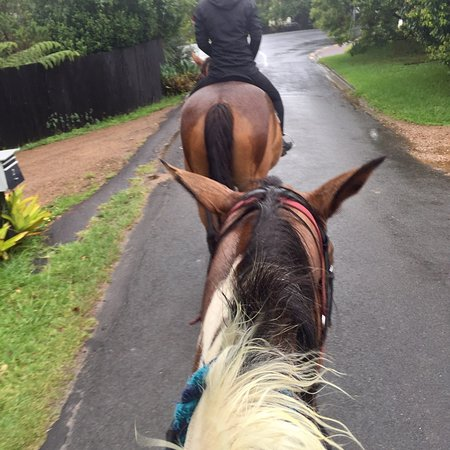 Waiheke Island, Neuseeland: Is great experience of bush and beach horse riding. Though is raining in the middle of horse rid