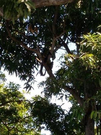 Granada, Nikaragua: 20180203_103903_large.jpg