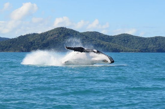 Whitsundays Whale Watching Croisière...