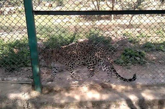 Sajjangarh Biological Wildlife...