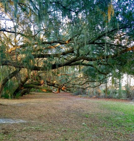 Fun things to do in spring hill fl