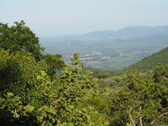 Kaapmuiden, South Africa: View from Verandah