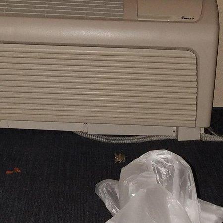 Hampton Inn & Suites Pittsburg: photo0.jpg