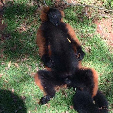 South Lakes Safari Zoo: photo2.jpg