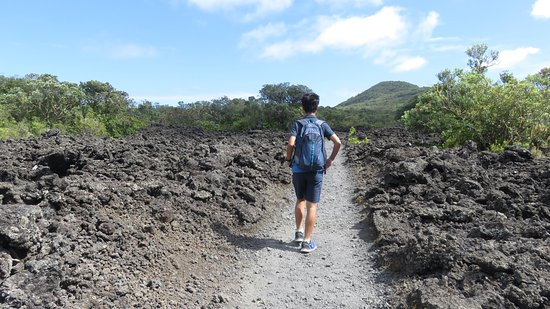 One hour walk track to the summit, Rangitoto Island, Auckland