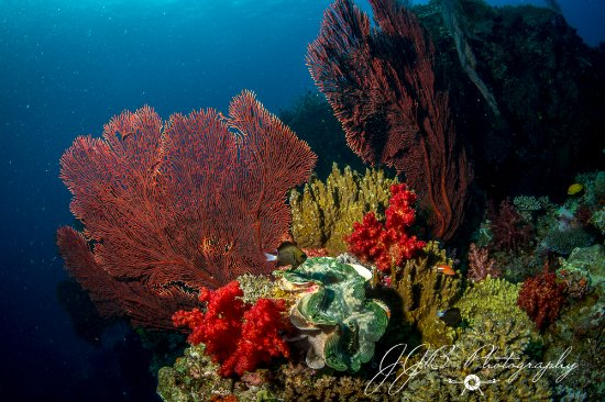 Beqa Island, Fiji: Corals, clams and fish
