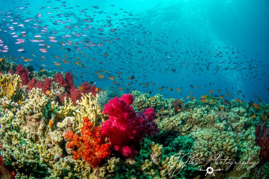 Beqa Island, Fiji: Some beautiful corals & fis
