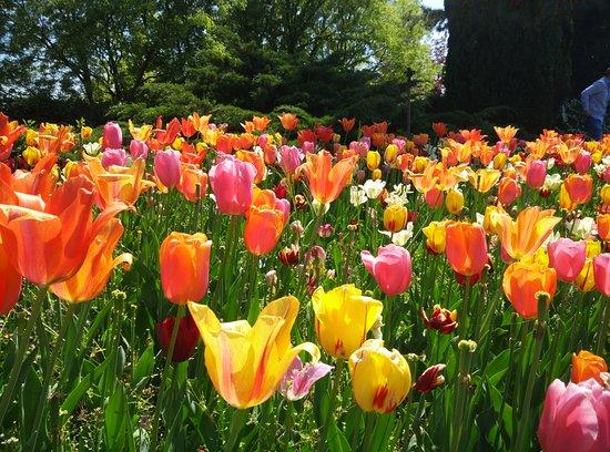 Parco Giardino Sigurta : Tulipanomania