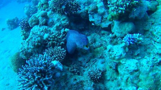 Amazing obr zok deep blue dive center akaba tripadvisor - Dive center blu ...