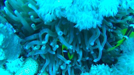 Amazing obr zok deep blue dive center akaba tripadvisor - Deep blue dive centre ...