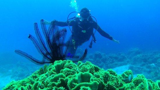 Amazing deep blue dive center akaba f nyk pe tripadvisor - Deep blue dive centre ...