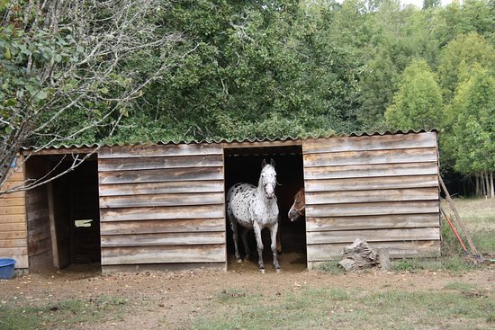 au fond du jardin les chevaux sont l 39 abris le peyrail les leves et thoumeyragues f nyk pe. Black Bedroom Furniture Sets. Home Design Ideas