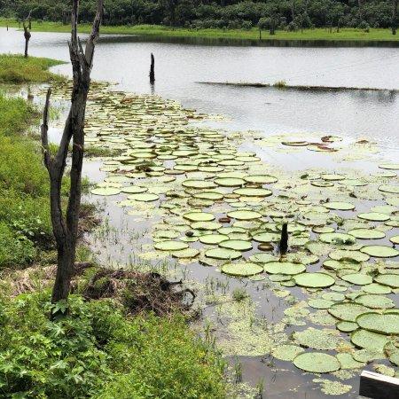 Parque Ecologico Januari : photo5.jpg