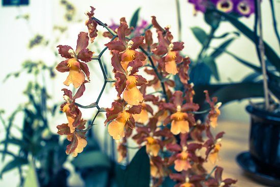 United States Botanic Garden: Flowers inside
