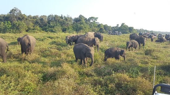 Elephants galore