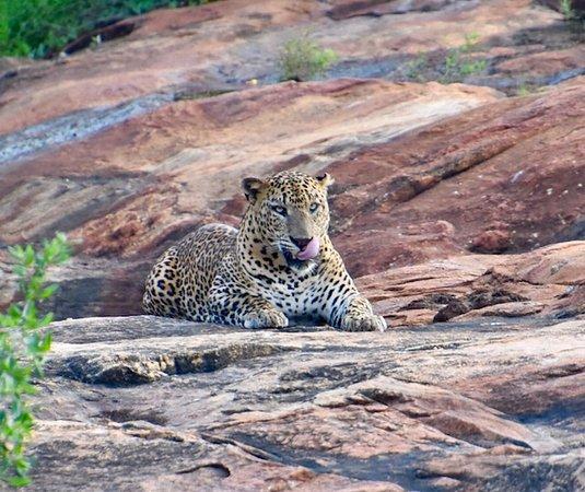 Menaka Safari