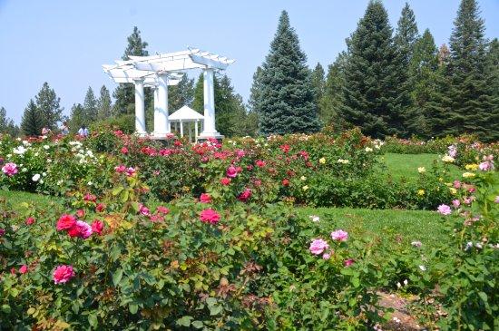 Rose Garden Foto De Manito Park Spokane Tripadvisor