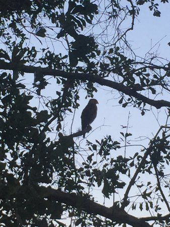 Masatepe, Никарагуа: Visitor to the Hacienda!